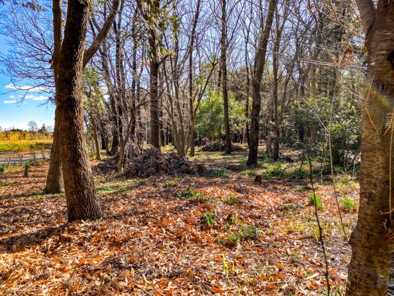 豊里ゆかりの森に積まれた枯れ枝