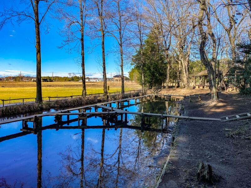 豊里ゆかりの森のテントサイト近くにある湿地