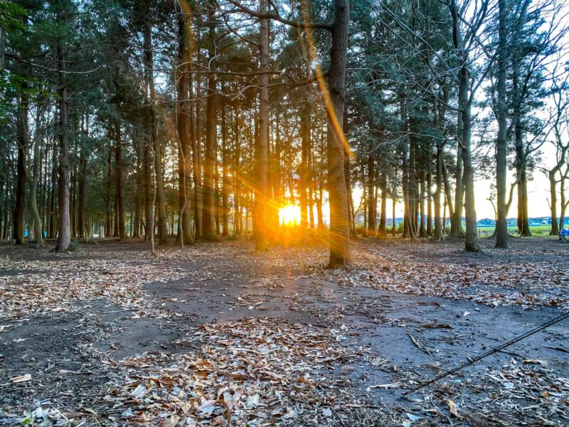 豊里ゆかりの森の夕日