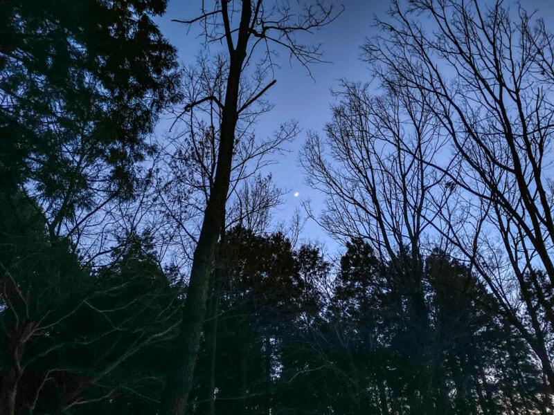 豊里ゆかりの森の月