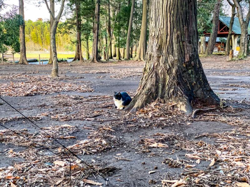 豊里ゆかりの森の猫