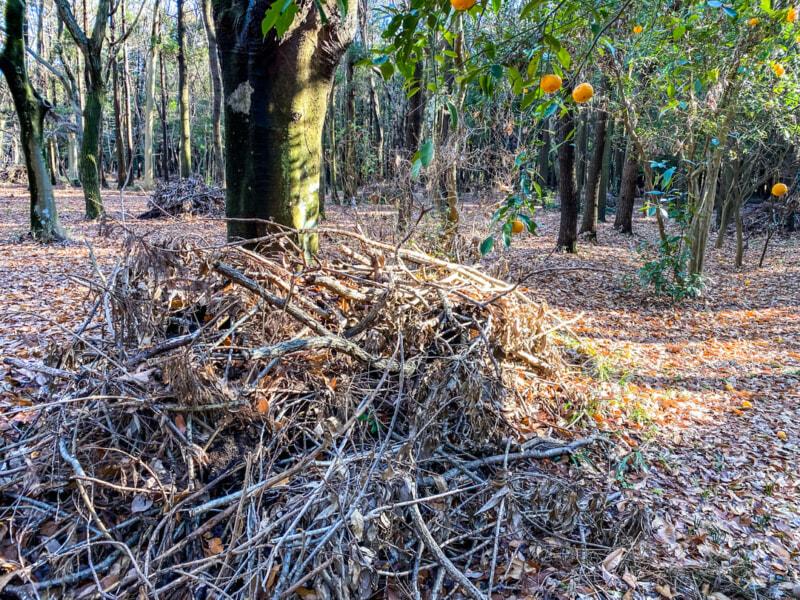 豊里ゆかりの森キャンプ場は薪が使い放題