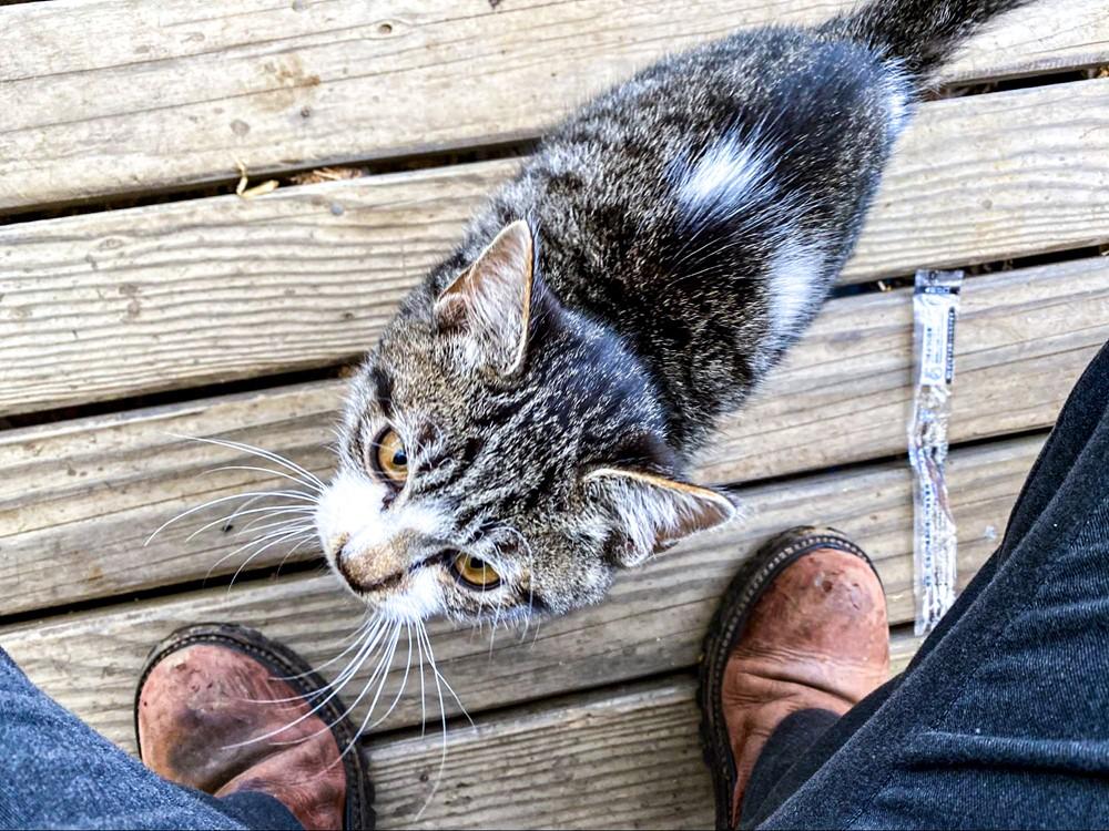 足元にすり寄ってきた子猫