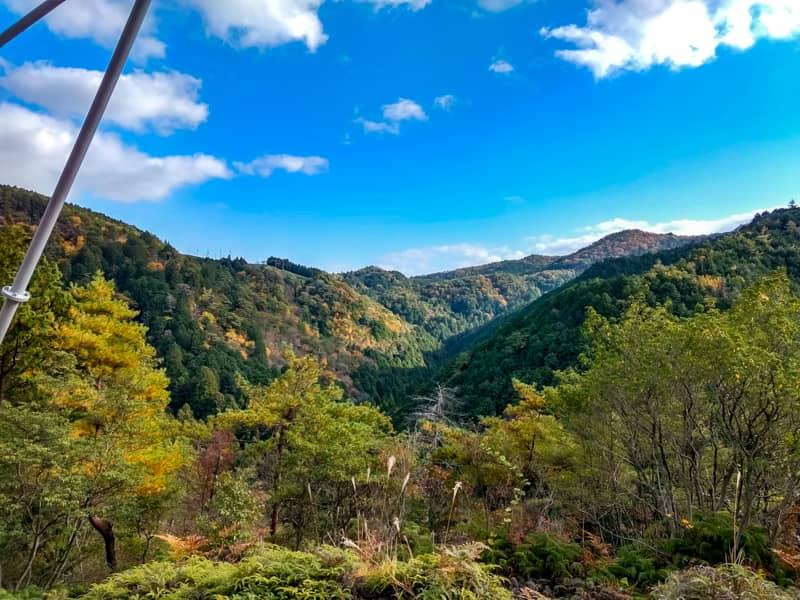 里山に広がる広大な原生林