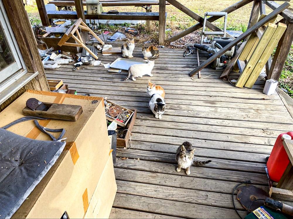 集団で現れた猫たち