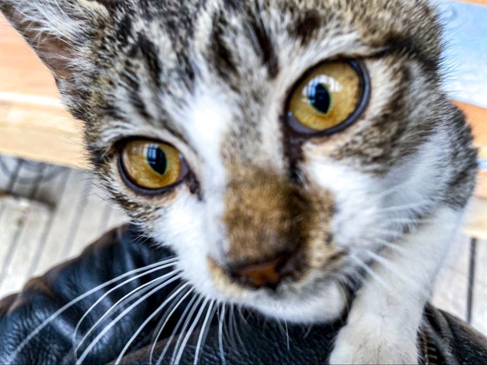 顔まで急接近してきた可愛い猫