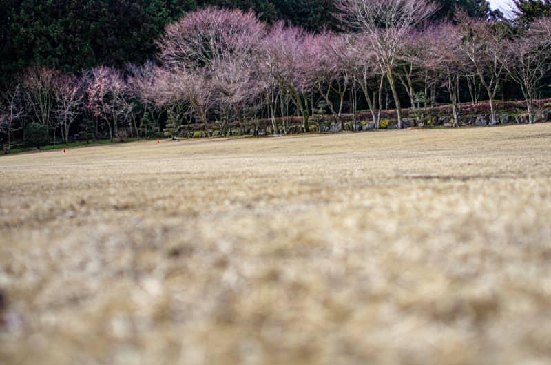 やまぼうしオートキャンプ場の芝生