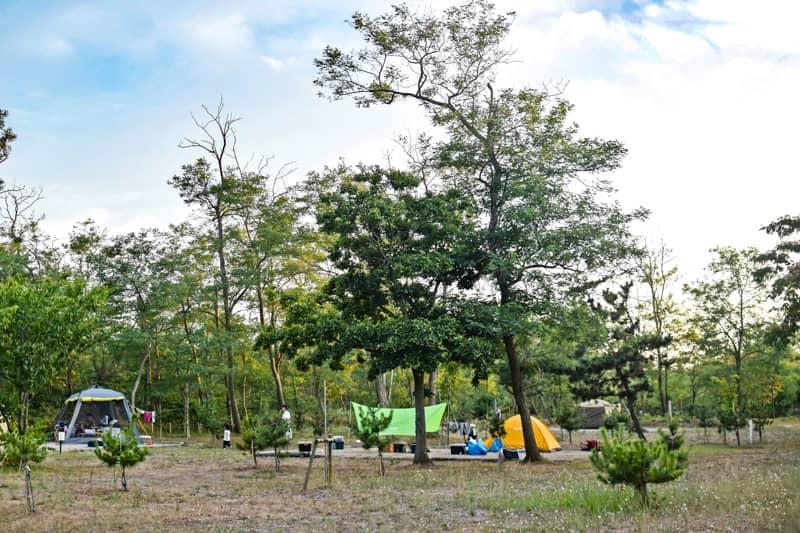 カブトムシが捕まえられるキャンプ場