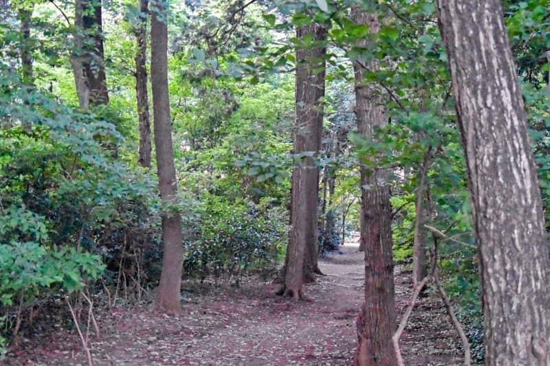 カブトムシを捕まえられそうな林