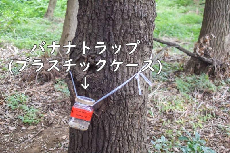 キャンプ場の木にセットされたバナナトラップ