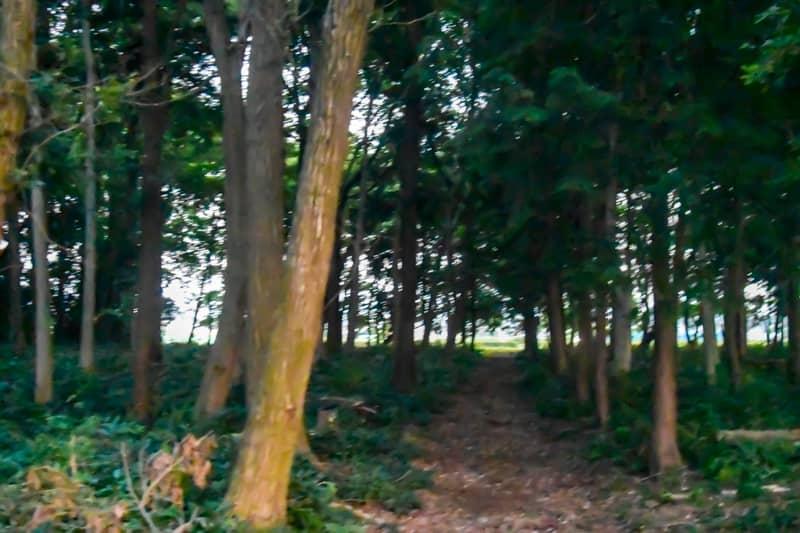薄暗い早朝の森林