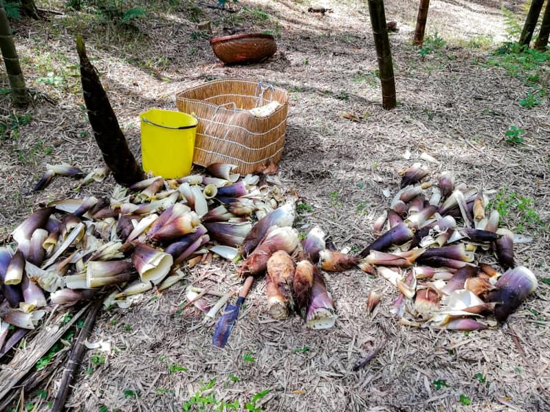 野草・山菜の下処理とおすすめレシピ-12