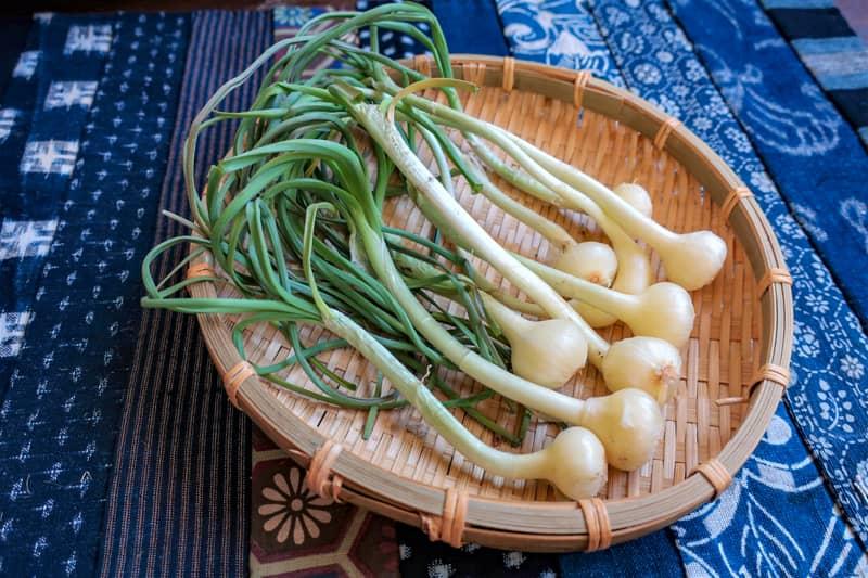 野草・山菜の下処理とおすすめレシピ-2