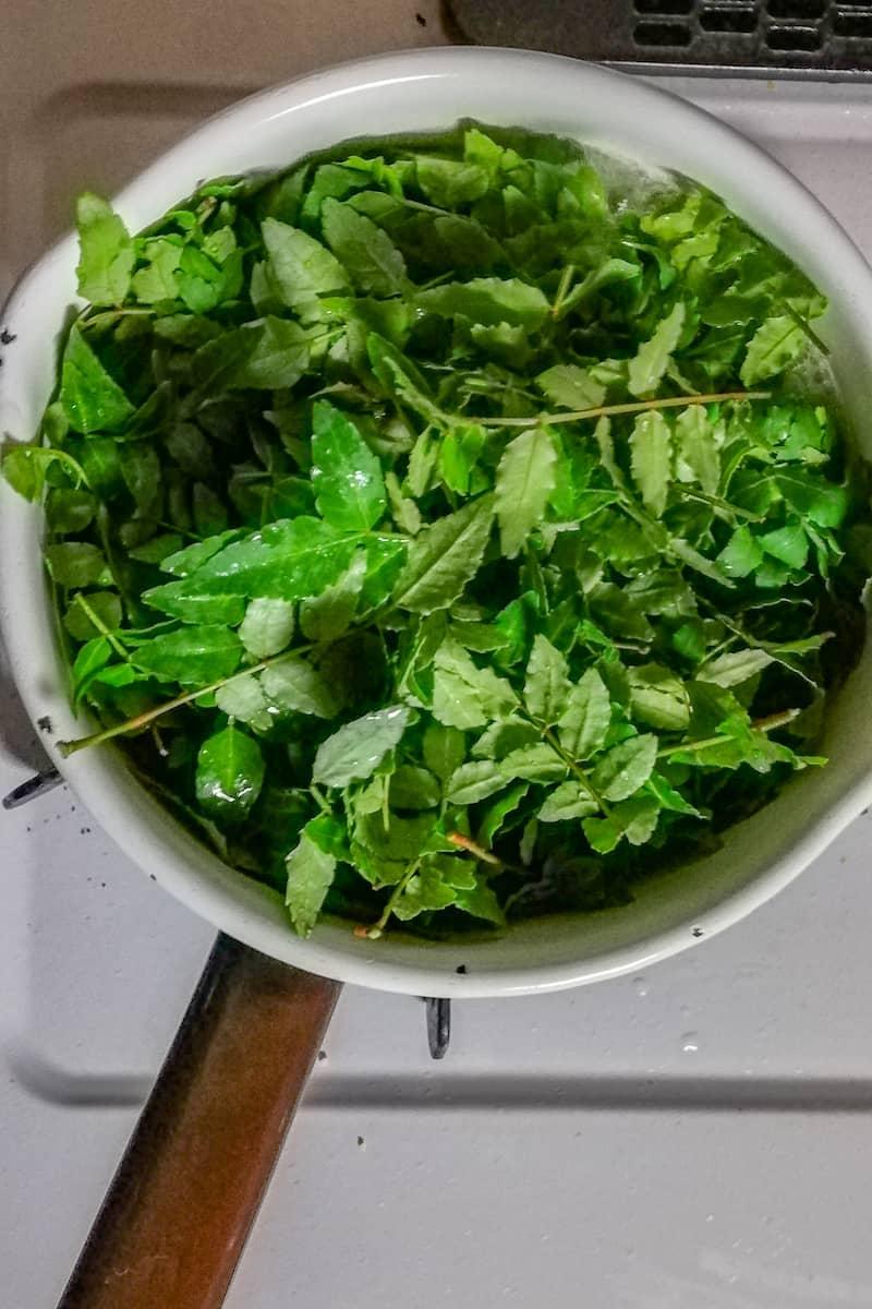 野草・山菜の下処理とおすすめレシピ-22