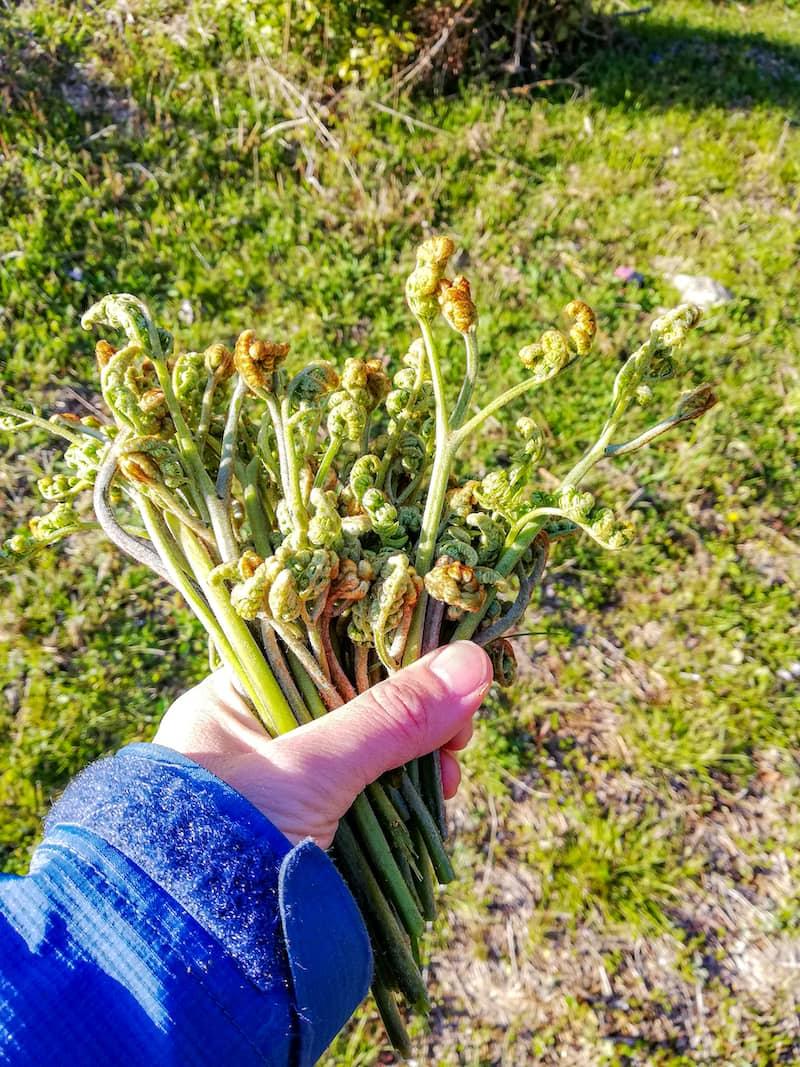 野草・山菜の下処理とおすすめレシピ-6