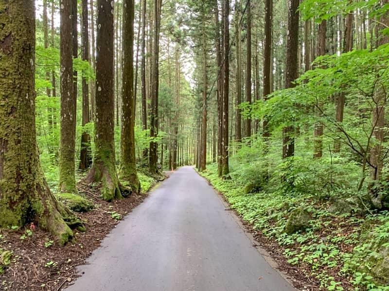 キャンプ場へ続く道はとても狭い