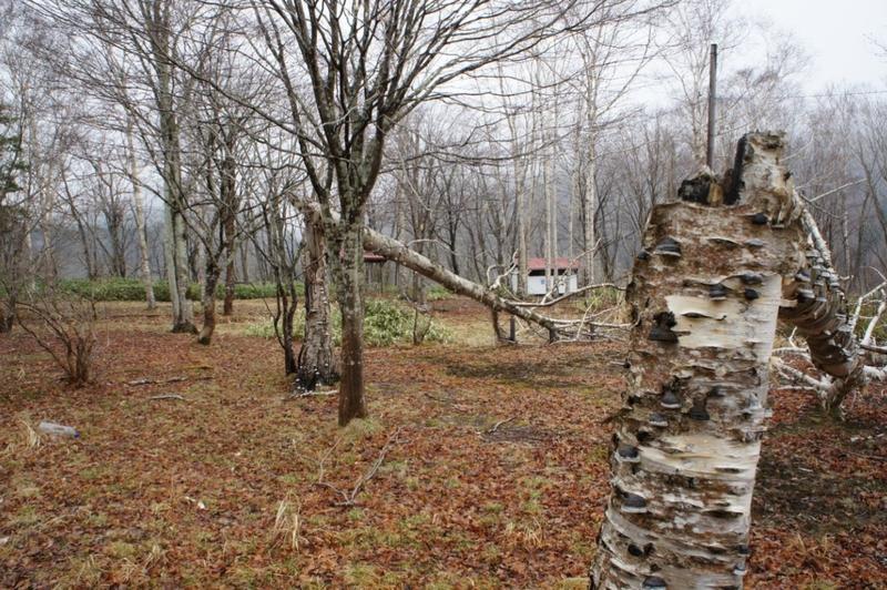台風で倒れた木々