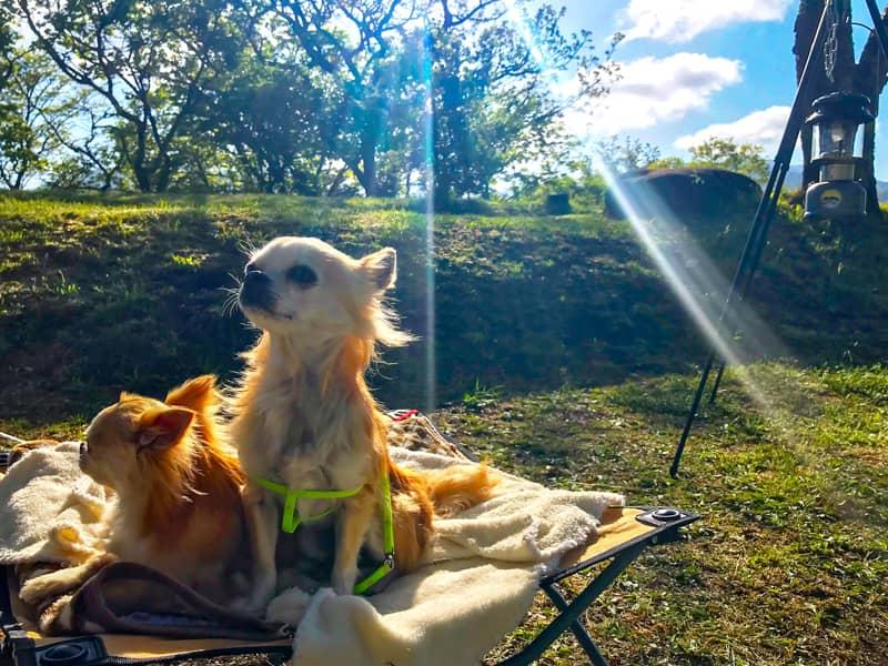 【大分県カナディアンビレッジ】おしゃれなロッジのあるキャンプ場にペット同伴で行ってきました