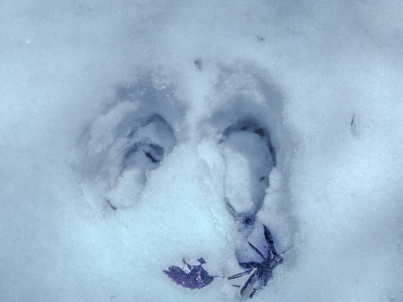 クマの足跡か