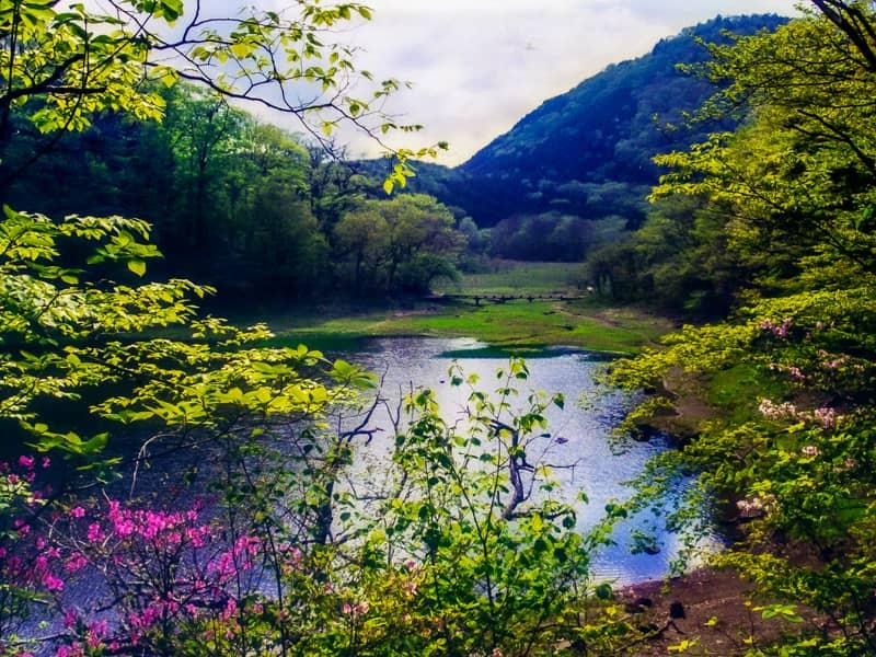 シカをよく見る湿地