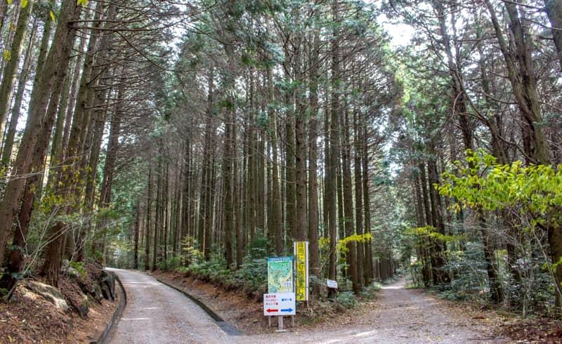 昭和の森24