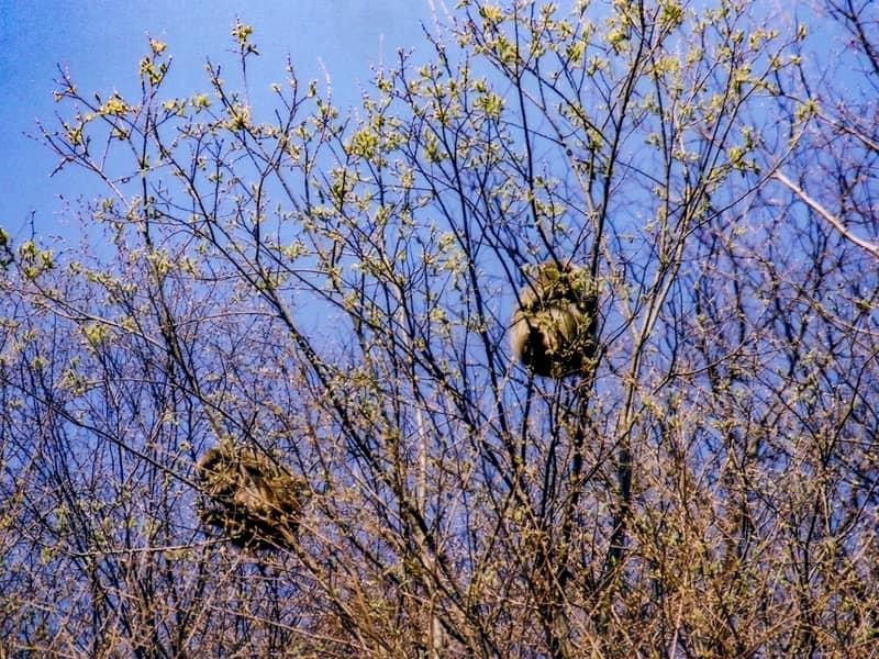 木に登るサル
