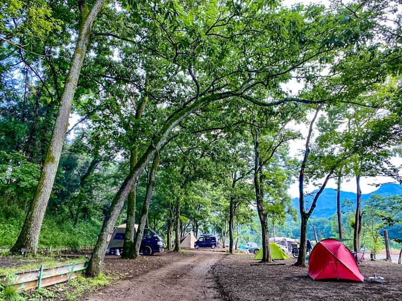 森のサイト2