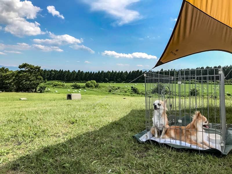 犬とのキャンプを100%楽しむために!たくさんの失敗から学んだ注意点を伝授します