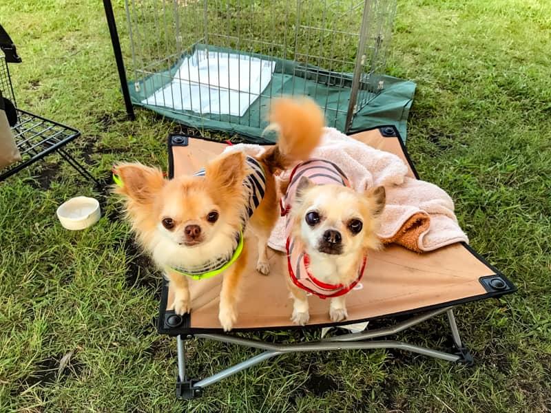 犬キャンプの失敗と注意点-4