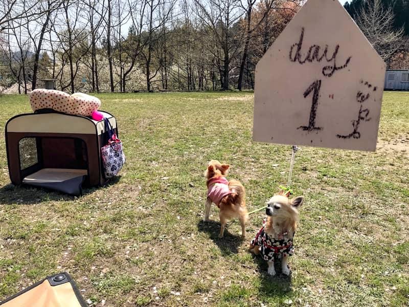 犬キャンプの失敗と注意点-5
