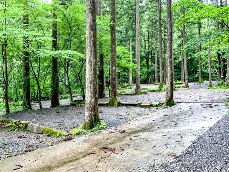 通が好む林間サイト