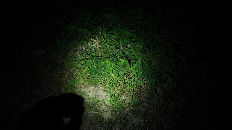 夜の地面をオーライトで照らす