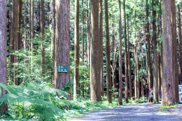 夏のキャンプinn海山の林間サイトレビュー!予約の取り方や狙い目の時期も教えます