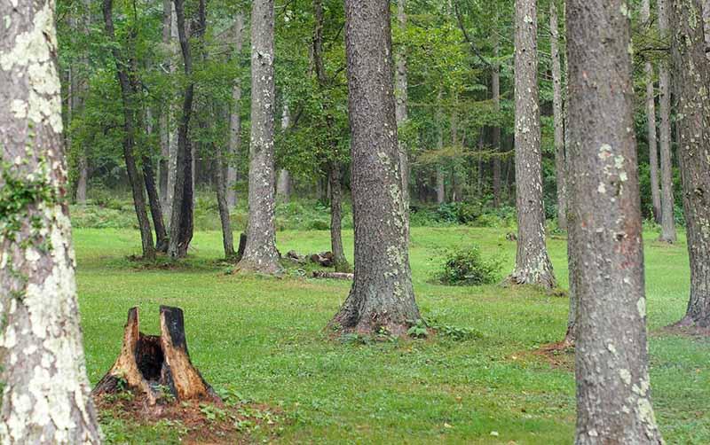 キャンプ場の地面