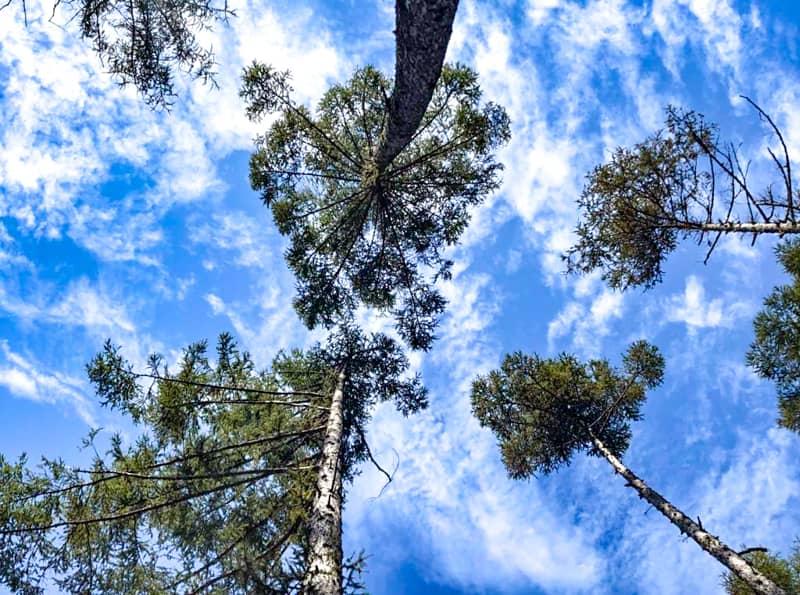 ハンモックから空を見上げる