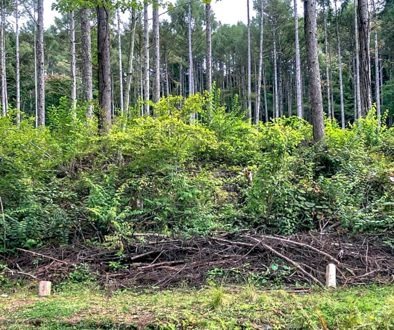 伐採された木が山積み