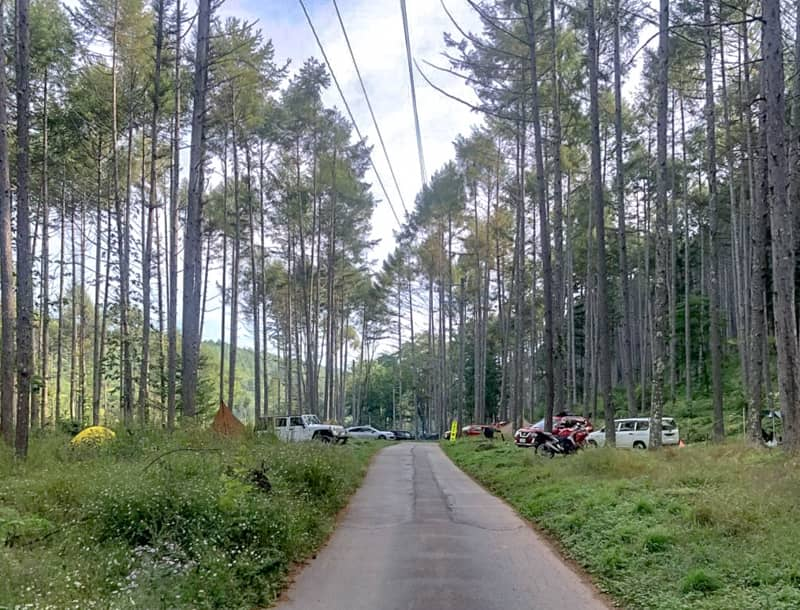 立場川キャンプ場に生えるカラマツの木