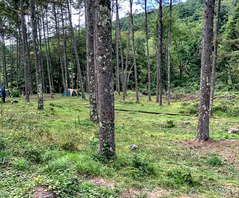 立場川キャンプ場の林間サイト