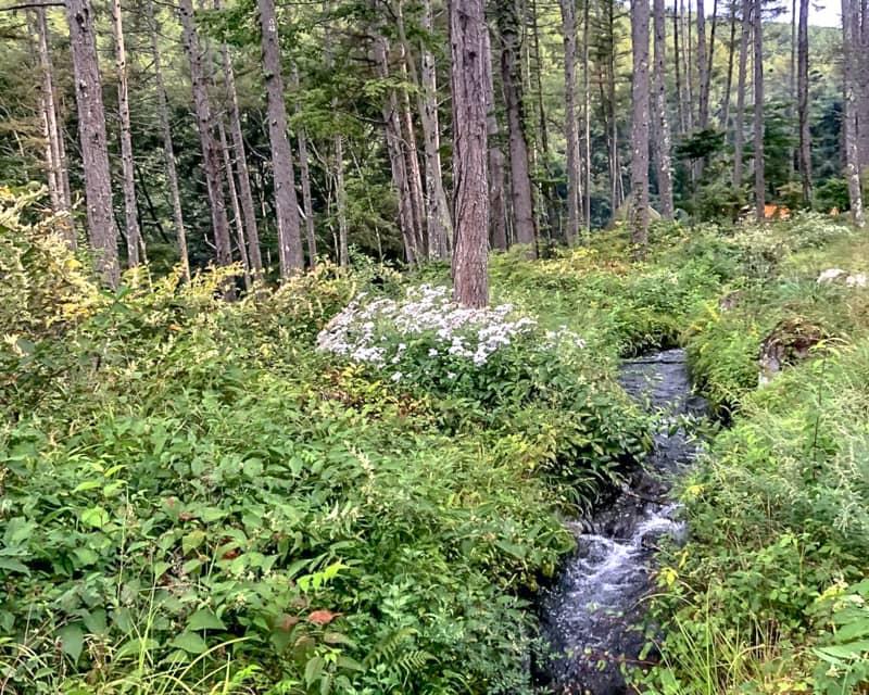 立場川キャンプ場内に流れる小川
