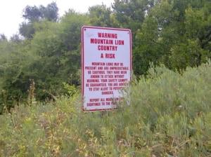 クーガーに遭遇したら逃げずに戦え。アメリカの公園のアドバイスが勇ましい件について