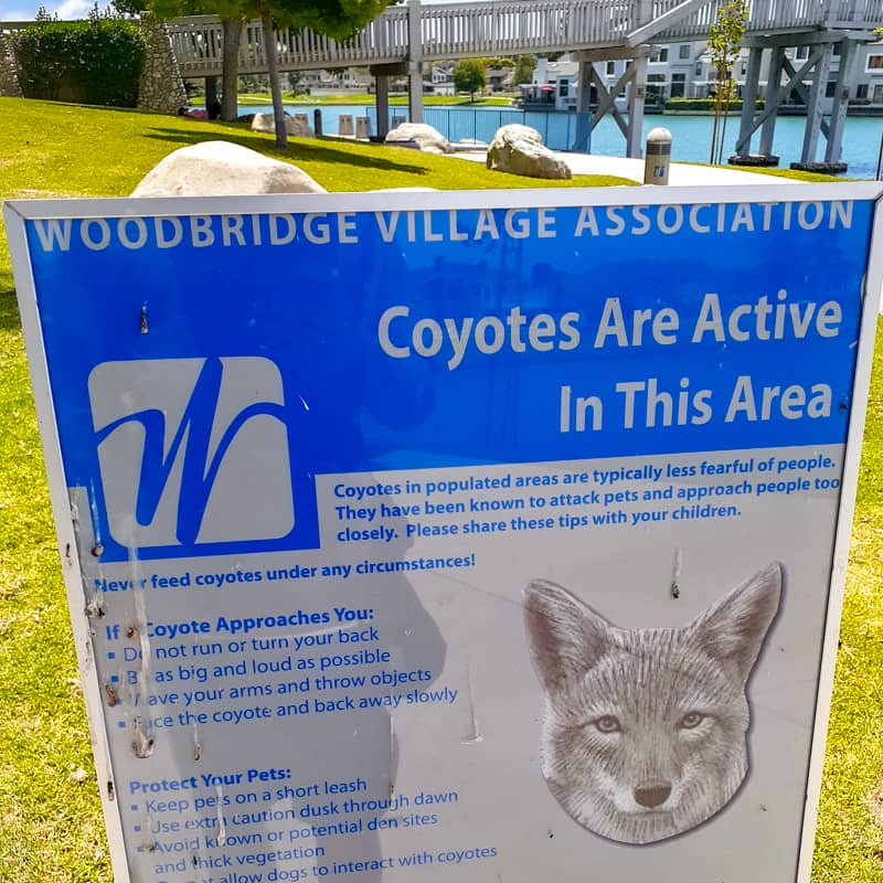 Wild-Animal-Warning_Pic_coyote_warning