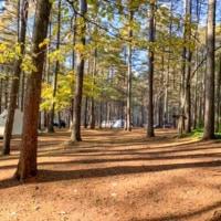 アウトサイドベースの広大な林間フリーサイトはまさに隠れ家のようなキャンプ場でした