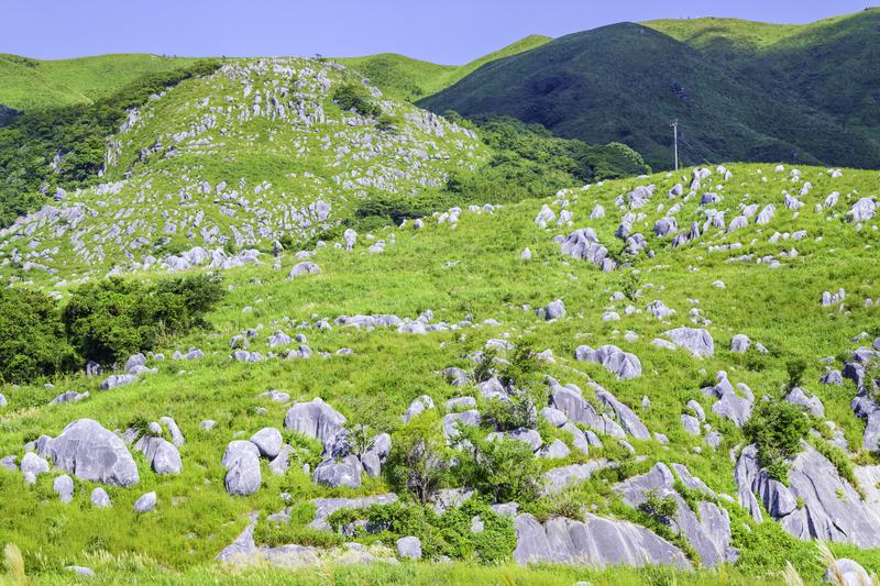 平尾台の羊群原