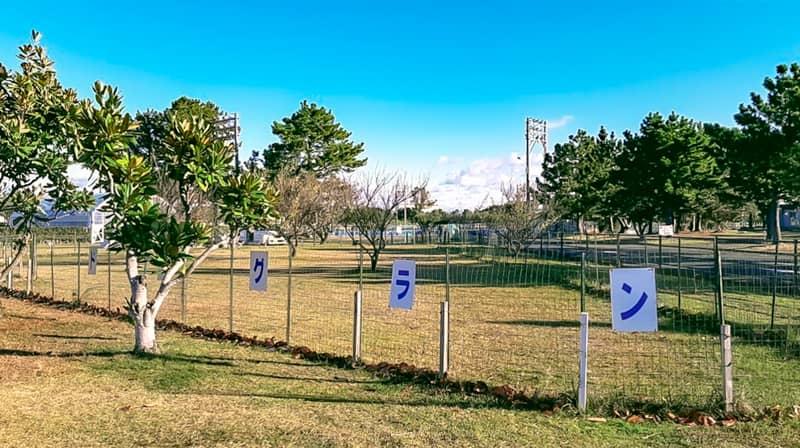 nagisaenl-camp-field-16