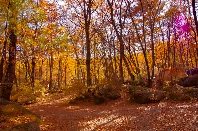紅葉が美しすぎる「南アルプス三景園オートキャンプ場」全サイトエリア詳細レビュー