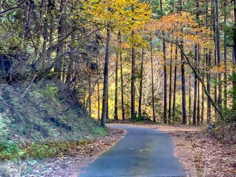 キャンプ場までの道はとても狭い