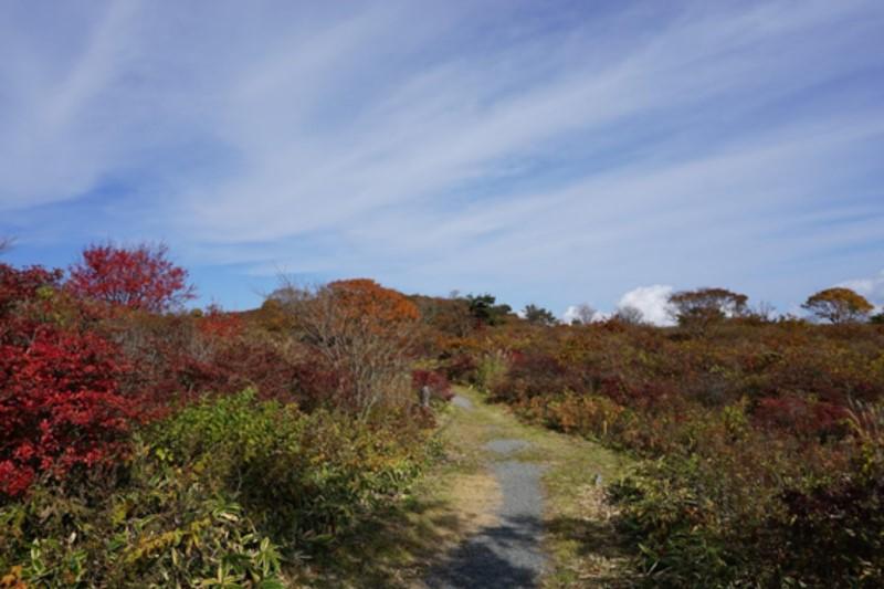 室根山への小路