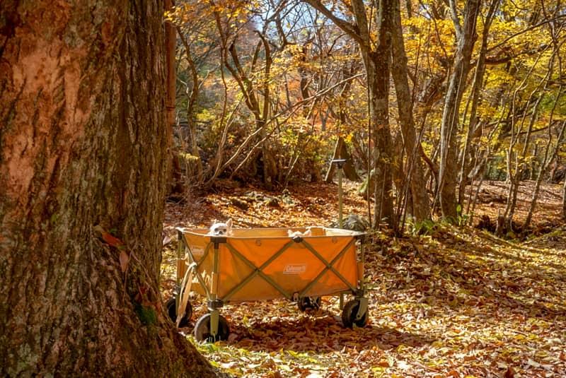 大分県玖珠郡にある「鉄山キャンプ場」は手つかずの自然が残る素敵なキャンプ場でした