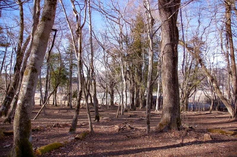 離れにある森なので秘密基地感が強く