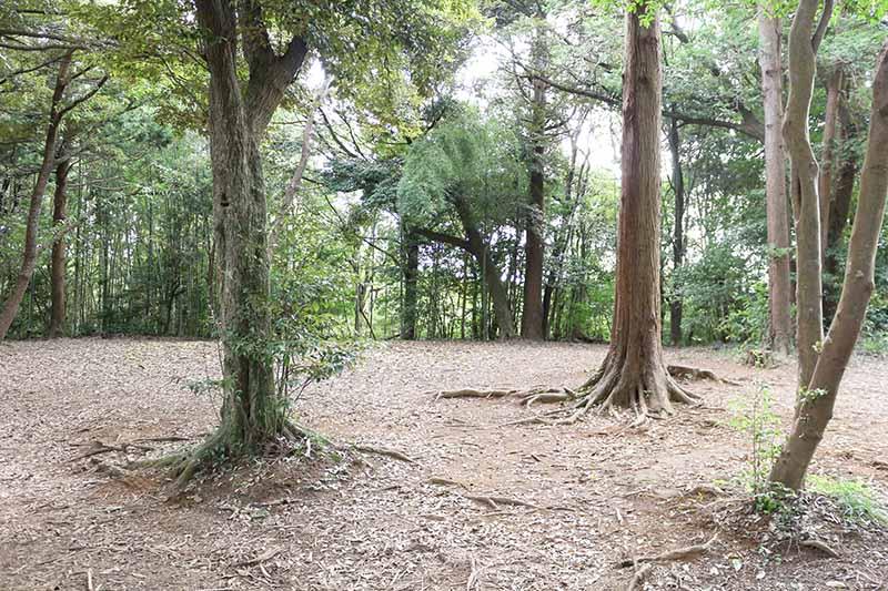 グループキャンプサイトの風景